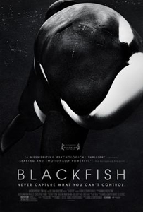 BlackFish A Conversation About BlackFish