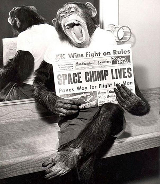 Space Chimp Lives 40 Must See Photos From Past