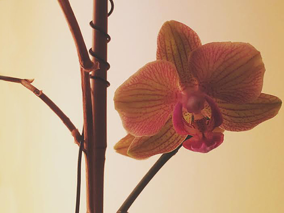 Orchids A Short Story About My Orchids   Life Lessons.