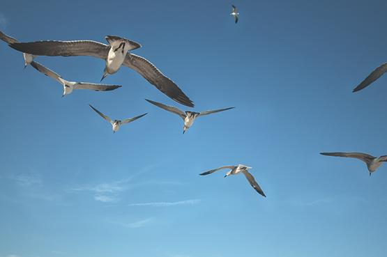 Birds Flying-Tucker Tuesday